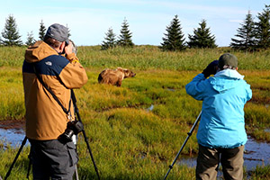 Up close photographing brown bears at Lake Clark National Park