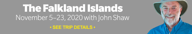 Join our 2020 Falkland Islands photo tour