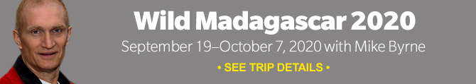 Join our 2020 Wild Madagascar photo tour