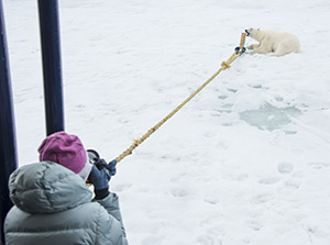 Polar bear guarding wooden stake