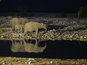 Animals at watering hole in Namibia