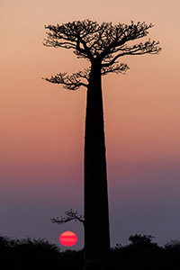 Madagascar sunset