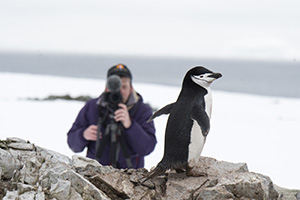 Photographer with chinstrap penguin