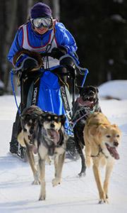 Dog sled racer in Fairbanks, Alaska