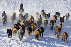 Stampeding horses in China