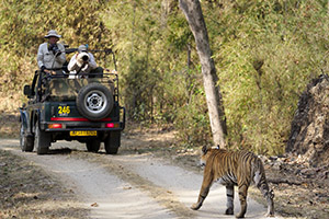 Viewing tigers in India