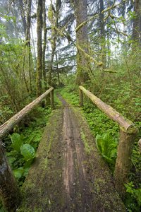 Olympic peninsula trail