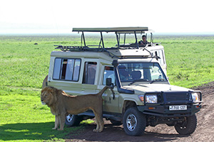 Lion near Land Rover in Tanzania
