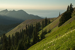 Hurricane Ridge Olympics National Park