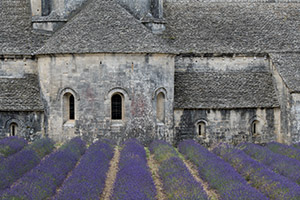 Lavender field at Senanque Abbey, Gordes