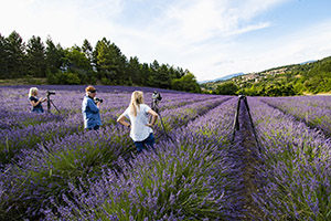 Photographing lavender in Provence