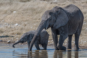 Elephants at watering hole in Namibia