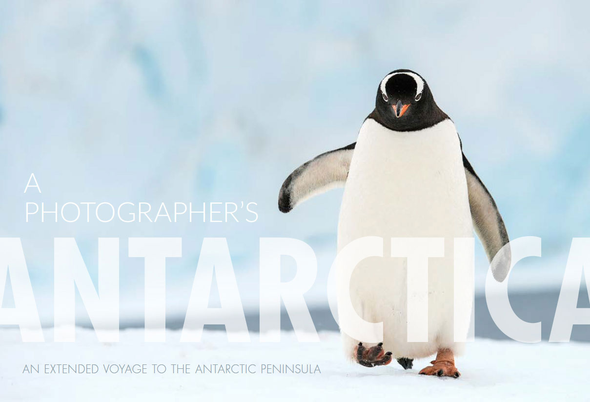 A Photographers Antarctica: Download Now
